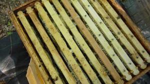 Le 11 mai 2011 initiation d'une division de ruche avec Antoine et Germain Premier cours