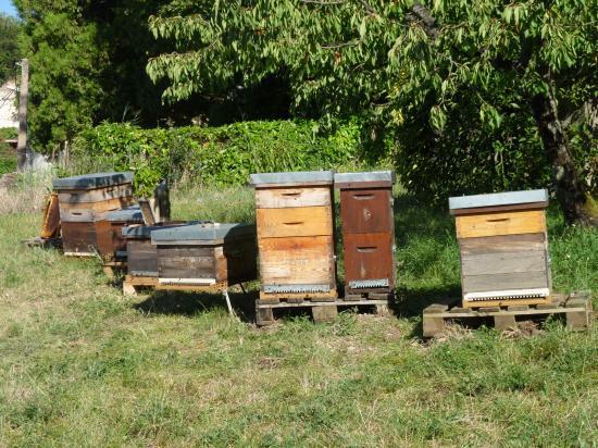 La vue générale du rucher de l'Hermitage.