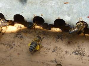 Lycée Professionnel de l'Hermitage Agen le 07 Juin 2011 colonie d'abeille entre  volet et fenêtre