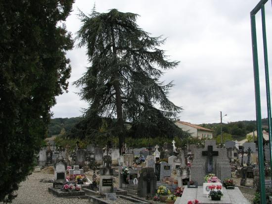 Dans le cimetière de Bruch dans un cèdre
